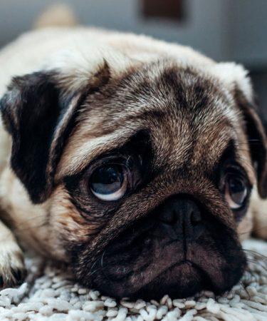 Photo d'un chien triste